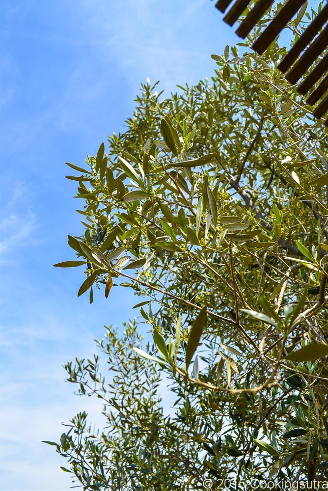 parsley bruschetta-6